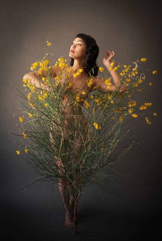 yellow bush-1